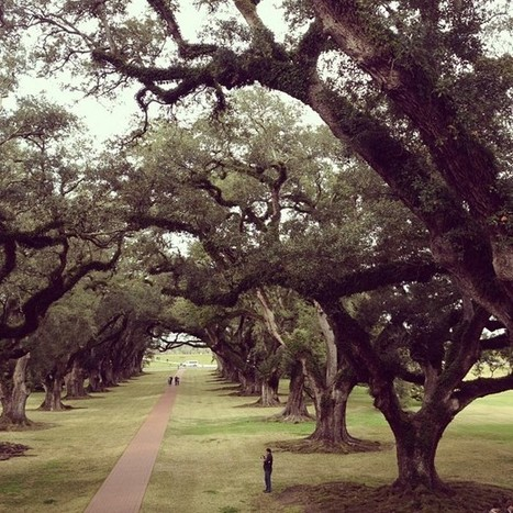 Fan photo | Oak Alley Plantation: Things to see! | Scoop.it