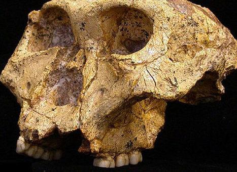 In de prehistorie bleef de man thuis | KAP_VerdaetS | Scoop.it