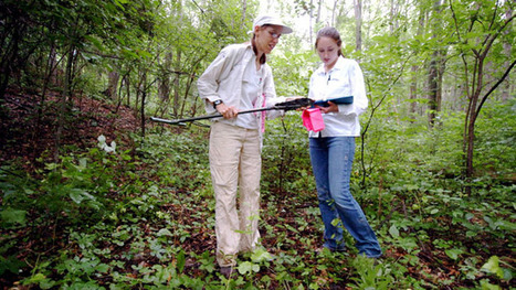 The next happening career – environmental consulting   News and Society » Environmental   Scoop.it