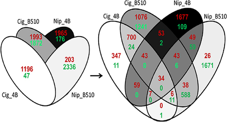 Plant root transcriptome profiling reveals a strain-dependent response during Azospirillum-rice cooperation | Plant Genomics | Scoop.it