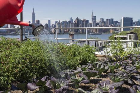Rooftop Gardens: Is Gardening Over Your Head? | Gardening in the City | Scoop.it