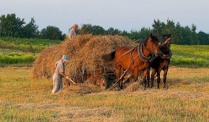 Polish farmers 'grassroots rebellion' | GMO GM Articles Research Links | Scoop.it