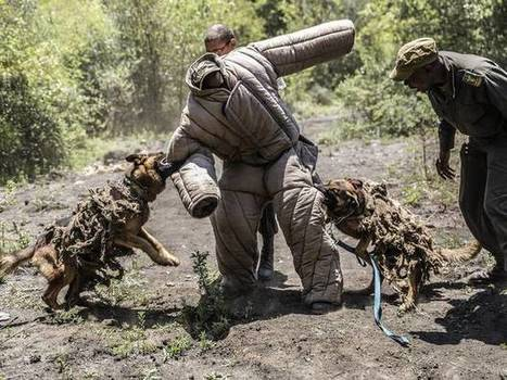 Dogs are being trained to attack poachers who have killed over 1,000 rhinos this year in South Africa | Bring Africa Home | Scoop.it