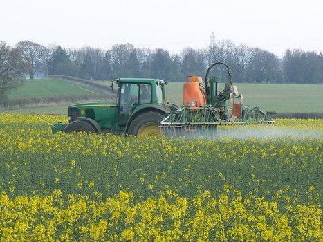 Le moratoire sur les pesticides tueurs d'abeilles n'est toujours pas appliqué | Actualités de l'environnement | Scoop.it