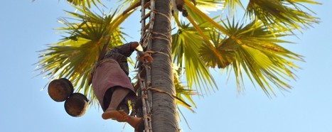 How to Make Palm Wine   Travel to Myanmar   Scoop.it