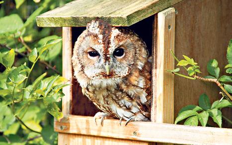 The best bird boxes for your garden - Telegraph.co.uk | Birds | Scoop.it