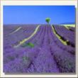 11 plantas aromáticas y medicinales que no pueden faltar en tu hogar ni en tu huerto. | ECOagricultor | Arquitectura | Scoop.it