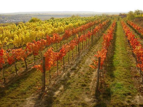 2013 Schlosskellerei Gobelsburg - Lössterrassen Grüner Veltliner | Vino in Love | Scoop.it