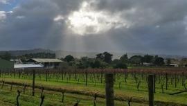 Best Auckland wineries | Wine from Down Under | Scoop.it