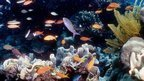 Australia declares marine reserve | Scuba Pulse | Scoop.it