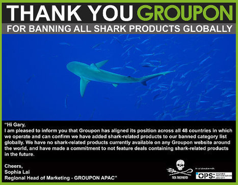 Groupon Bans All Shark Products from their Sites Worldwide - Sea Shepherd Conservation Society | All about water, the oceans, environmental issues | Scoop.it