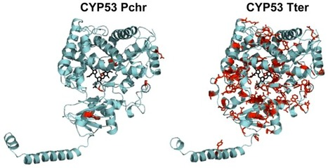 Cytochrome P450 Monooxygenase CYP53 Family in Fungi: Comparative Structural and Evolutionary Analysis and Its Role as a Common Alternative Anti-Fungal Drug Target | Fungicide Hormesis | Scoop.it