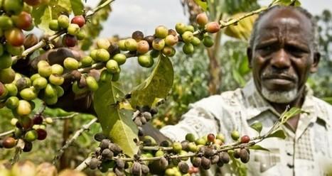 El comercio justo de café - Sabrosía | Investigación geografica | Scoop.it