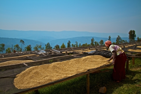 Reflections From Rwanda: Investing In One of the World's Fastest-Growing ...   Coffee News   Scoop.it