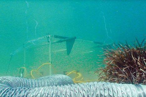 Climat: l'acidification des océans altère la faune et la flore | Aquariophilie | Scoop.it