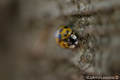 Minimalism – A macro afternoon with the Zeiss Touit 50mm (X mount) | MirrorLessons | Photography | Scoop.it