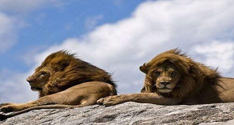 Flyingwings International Safari's   Realize yo...   African Safari Tours   Scoop.it