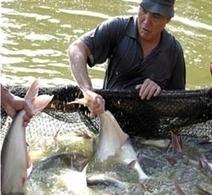 Experts promote sustainable aquaculture practices — Vietnam ...   Natur   Scoop.it