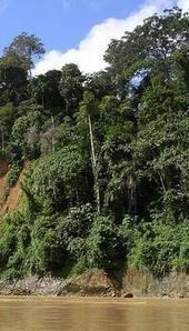 Amazon Rainforest Facts for Kids | Rainforest Research | Scoop.it