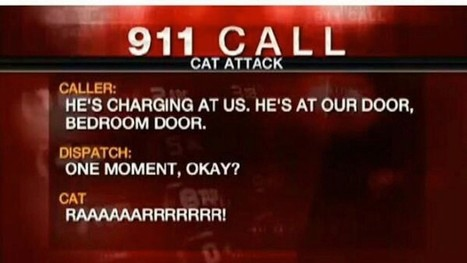 """Man Calls 911 After """"Hostile"""" 22-Pound Cat Traps Family in Bedroom   Macro.Today   Scoop.it"""