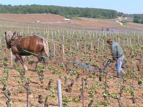 Organic wine vs. biodynamic wine, what is the difference? | Wine News | Scoop.it
