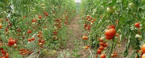 L'agriculture biologique, c'est quoi ? | Questions de développement ... | Scoop.it