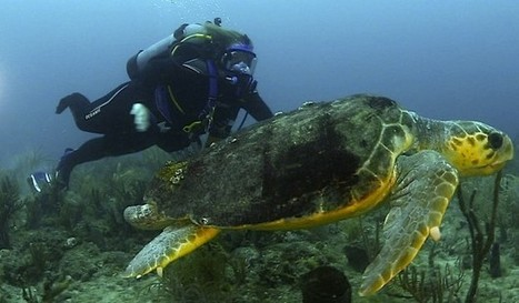 #Veterans #Dive To Raise #Awareness About #Overfishing | Rescue our Ocean's & it's species from Man's Pollution! | Scoop.it