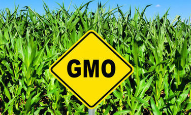 New Study Gives Genetically-Modified Crops a Failing Grade - Care2.com | Karmic Pantry | Scoop.it