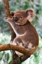 Australie : les éditeurs vendent leurs ebooks en direct sur leur site | E Book : le livre à l'ère du numérique | Scoop.it