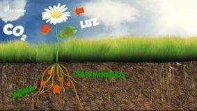 O que é a fotossíntese? | Ciências Naturais | Scoop.it