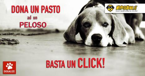 Dona un pasto con un click. My Pet's Hero sposa l'iniziativa di Dogalize | My Pet's Hero | Scoop.it