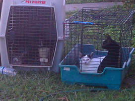 140 cats, other animals -- most sick, some dead -- removed from Florida house | The Funniest Cats In The World! | Scoop.it