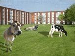 L'agriculture urbaine, entre terrains d'entente et champs de tension. | biodiversité en milieu urbain | Scoop.it