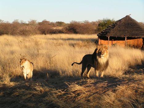 Namibia Safari, viaggi su misura all'insegna della scoperta | ViaggiSudAfrica | Scoop.it