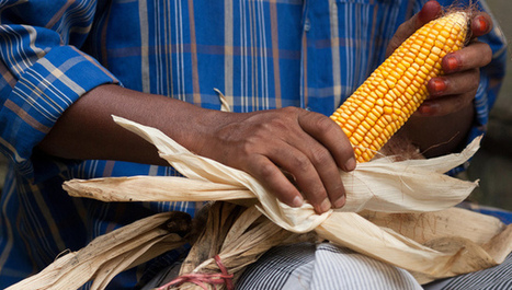 Research funding and skills key to food for post-2015 | Food Security | Scoop.it