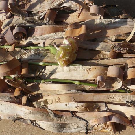 Flower Flash Mob - Dia 5           Artesaniaflorae   Artesanía vegetal y arte floral   artesaniaflorae   Scoop.it
