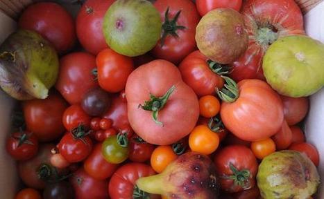Aliments & Santé : Cinq astuces d'internautes pour manger de bonnes tomates (et de bons fruits et légumes) | Vie de famille, Beauté & Bien-être de Melodie68 | Scoop.it
