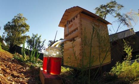 Deux apiculteurs australiens font fortune avec cette incroyable ruche   numerivrac   Scoop.it
