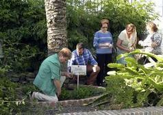 Vecinos mejoran su salud a golpe de infusión gracias a un jardín medicinal   CIENCIA Y SALUD   Scoop.it