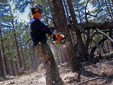 Sequester Guts Wildfire Prevention, Sets Up Bigger Blazes | Sustain Our Earth | Scoop.it
