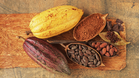A Chocolate Pill? Scientists To Test Whether Cocoa Extract Boosts Health | Erba Volant - Applied Plant Science | Scoop.it