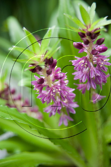 Hyacinths Flower Bulbs – The Fragrance from the bed of flowers | Flower Bulbs | Scoop.it