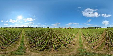 Vignoble du château Smith-Haut-Lafitte à Martillac - France par Pascal Moulin Photographe - Panoram 360 x 180° au mât télescopique (hauteur 5 mètres) | moulin360panoramic | Scoop.it