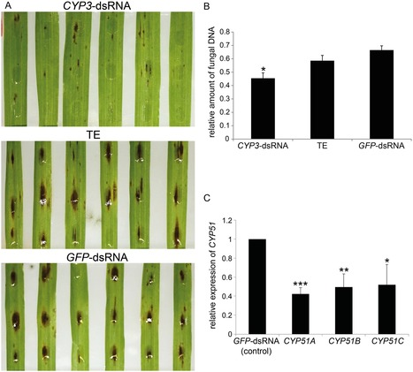 An RNAi-Based Control of  Fusarium graminearum  Infections Through Spraying of Long dsRNAs Involves a Plant Passage and Is Controlled by the Fungal Silencing Machinery | Plant pathogenic fungi | Scoop.it
