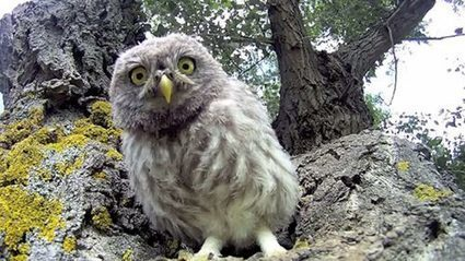 3 Baby Owls and a GoPro Camera, What Fun!   Animal Bliss   Animal Welfare   Scoop.it