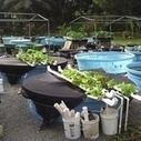 Aquaponics Is Growing Farms in the Most Unlikely Places | Urban Aquaponics Farm | Scoop.it
