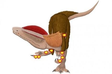 Dinosaur Survived A Record Number Of Bone Fractures | IFLScience | Me&Ubuntu | Scoop.it