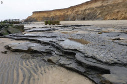 Europe's oldest footprints uncovered on English coast | Aux origines | Scoop.it