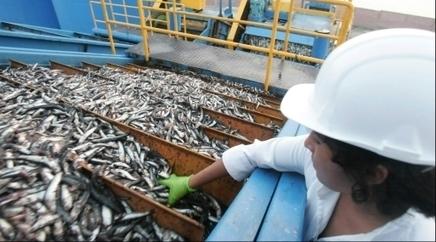 Harina de pescado alcanza su precio más alto en diez años por menor stock de anchoveta   HISTORIA Y GEOGRAFÍA VIVAS   Scoop.it
