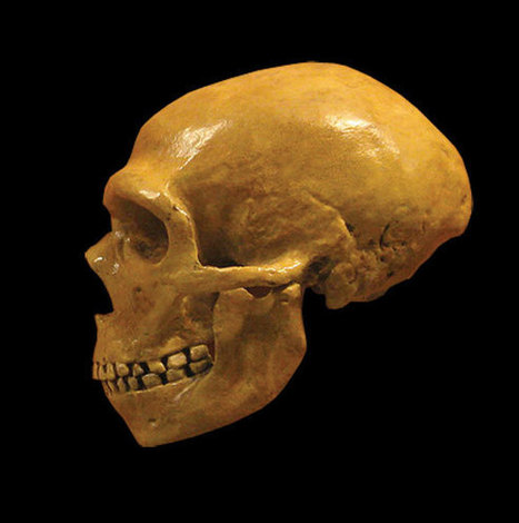 Cultural Competition May Account for Neanderthal Extinction - Archaeology Magazine | Aux origines | Scoop.it